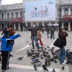 Венеция: Голуби