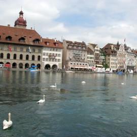 Швейцария: Лебеди