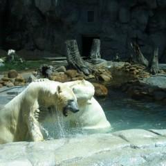 Австралия: Парки на Голд Косте