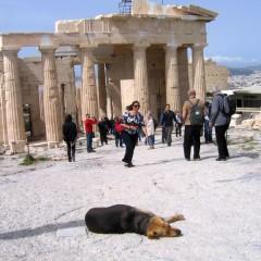 Афины: Люди и собаки