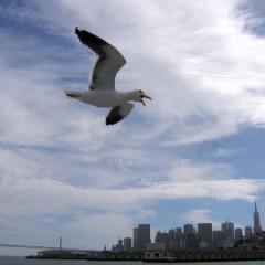 Сан-Франциско: Снимаем