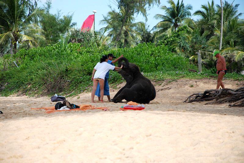 Таиланд животные фото