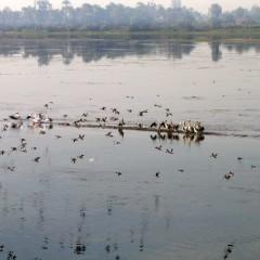 Египет: Круиз по Нилу