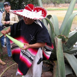 Мексика: Кактусим по полной!