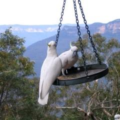 Австралия: Голубые горы