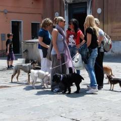 Венеция: Суша