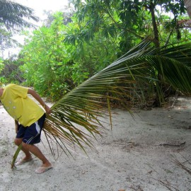 Мальдивы: Обитатели