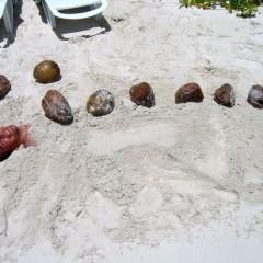 Мальдивы: Чем заняться?