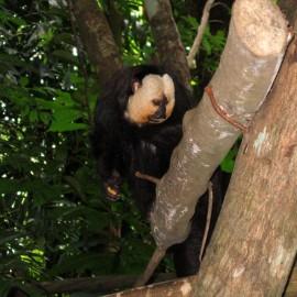 Сингапур: Флора и фауна