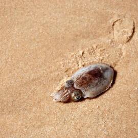 Дары моря в Муйне